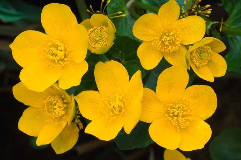 top ten beautiful yellow flowers