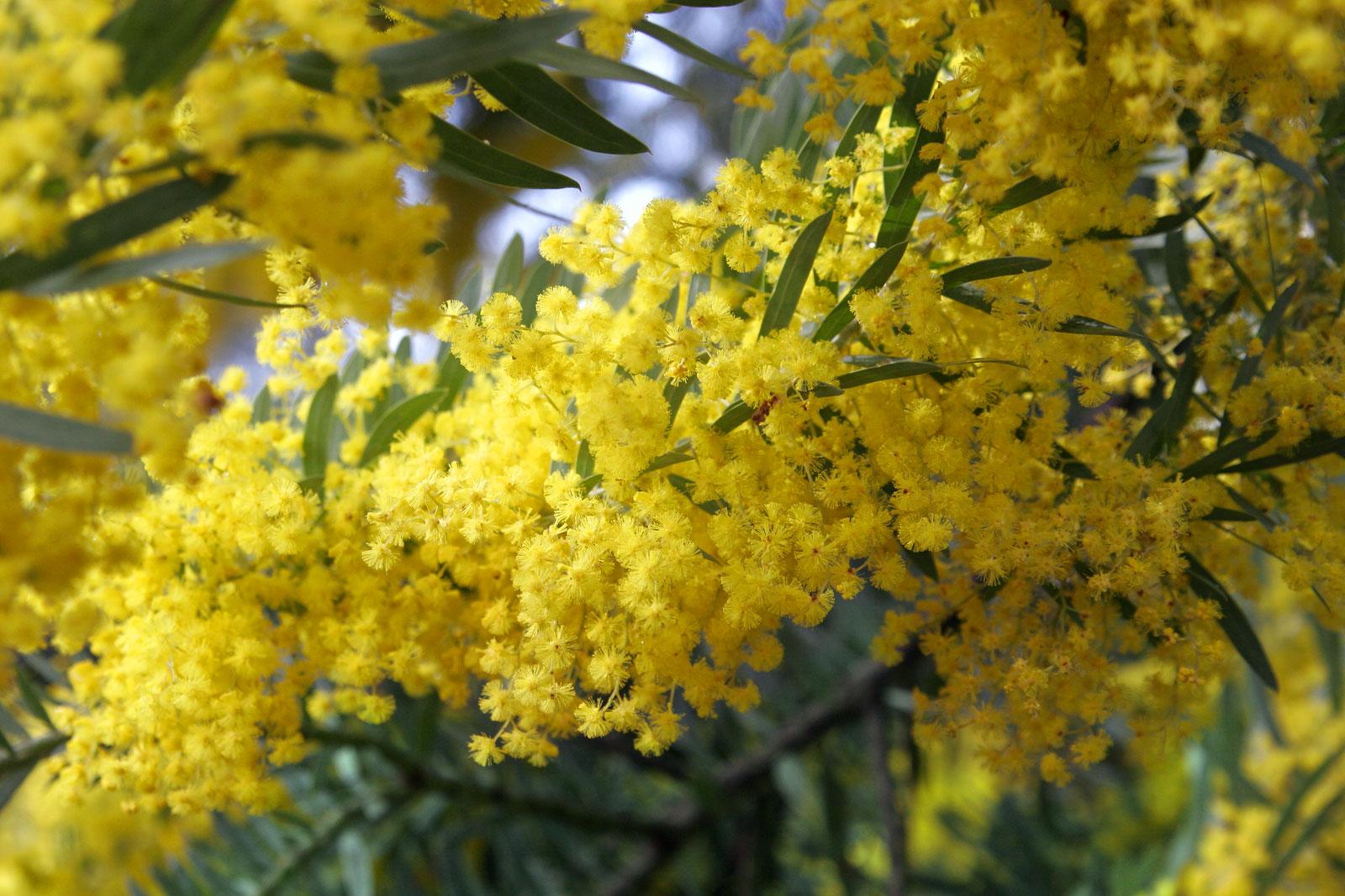stunning yellow flowers