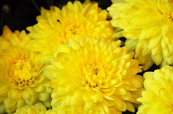 yellow flowers in the world