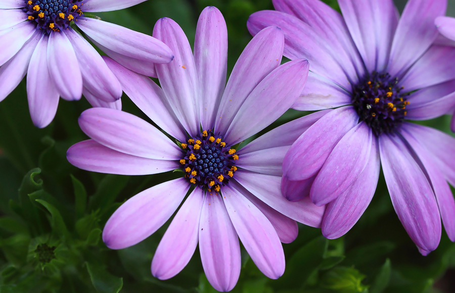 most beautiful indian flowers